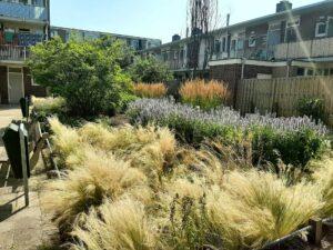 aanleg-onderhoud openbare tuin