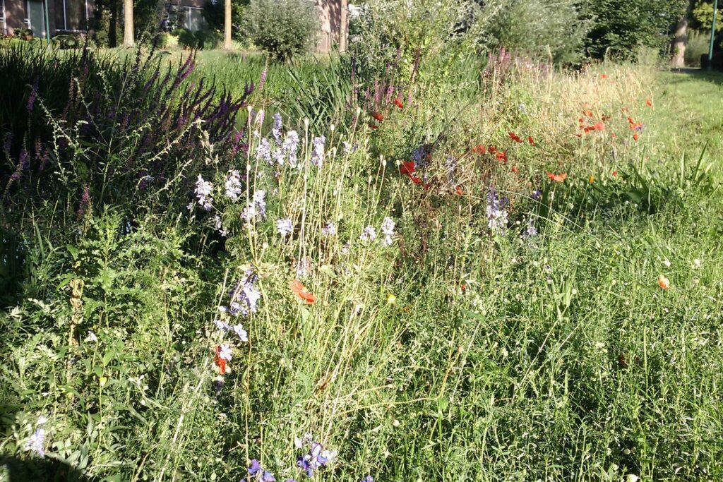 ecologische bloeiende border